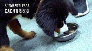 pienso-hills-science-plan-cachorros