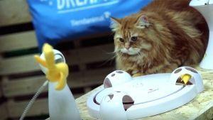 juguetes-interactivos-para-gatos-frolicat