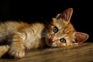 El kit para gatos que deberías tener