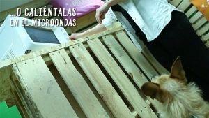 Análisis: Alimento húmedo Criadores en bandeja para microondas