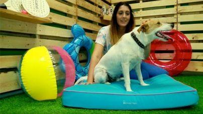 Análisis: Colchón refrescante para perros Wondermals