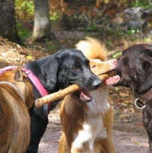 Perros: diferencia entre machos y hembras
