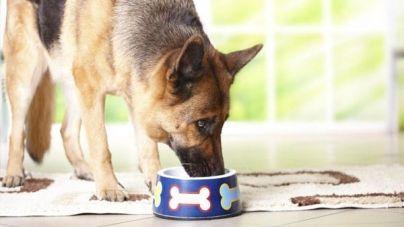 Perros de raza grande: recomendaciones a la hora de comer