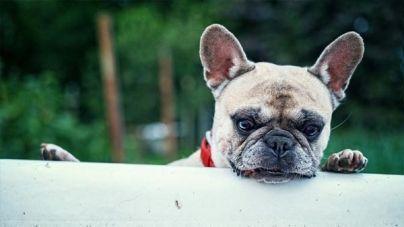 En qué consiste el síndrome de Cushing en perros