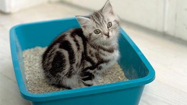 como-ensenar-a-un-gato-a-usar-el-arenero