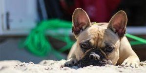 Cómo proteger a tu perro del sol y el calor