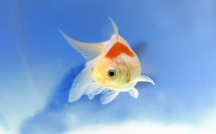Tiendanimal blog todo sobre tu mascota for Cria de peces en casa