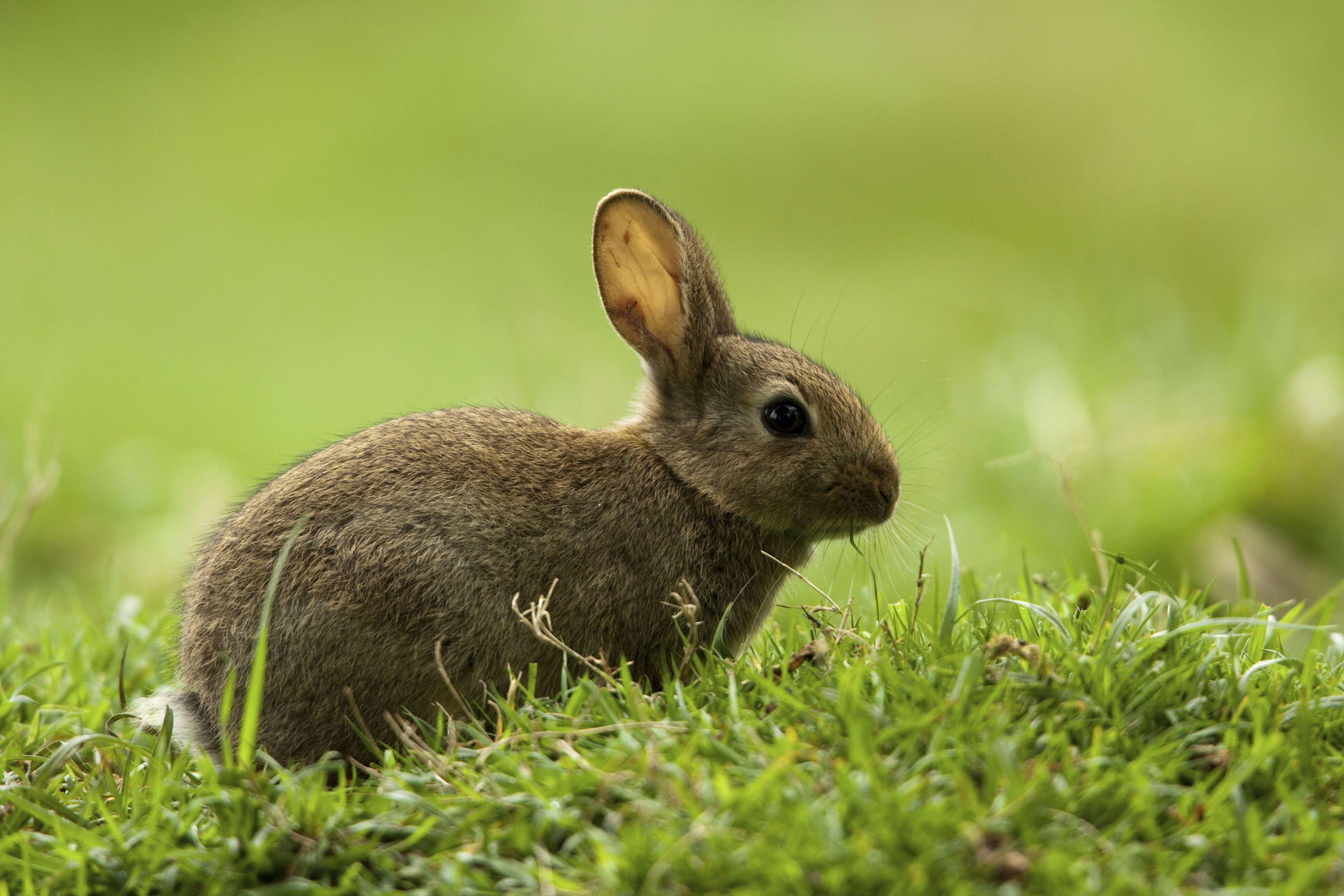 parásito en perro de conejo