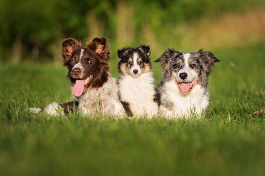 diferencias-entre-perro-macho-y-hembra