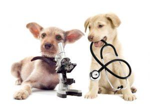 como-curar-una-herida-en-un-perro-y-otras-mascotas