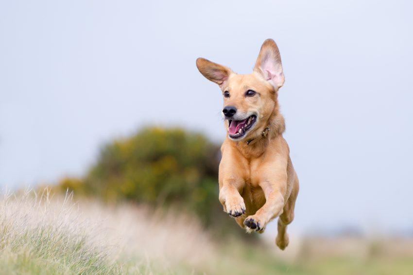 collar-eléctrico-para-perros