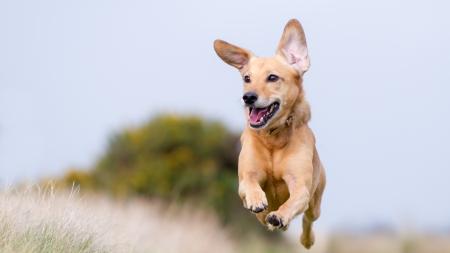 Uso del collar eléctrico para perros