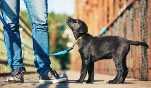 como-educar-cachorro