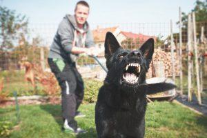 como-prevenir-mordedura-perro
