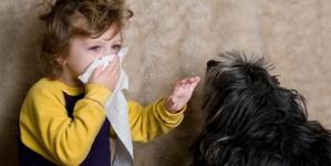 Alergia a los perros