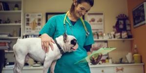 Hemograma en perros