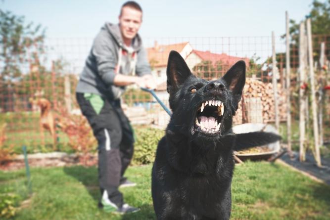 ¿Cómo prevenir una mordedura de perro?