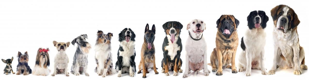 Preguntas frecuentes sobre las razas de perros