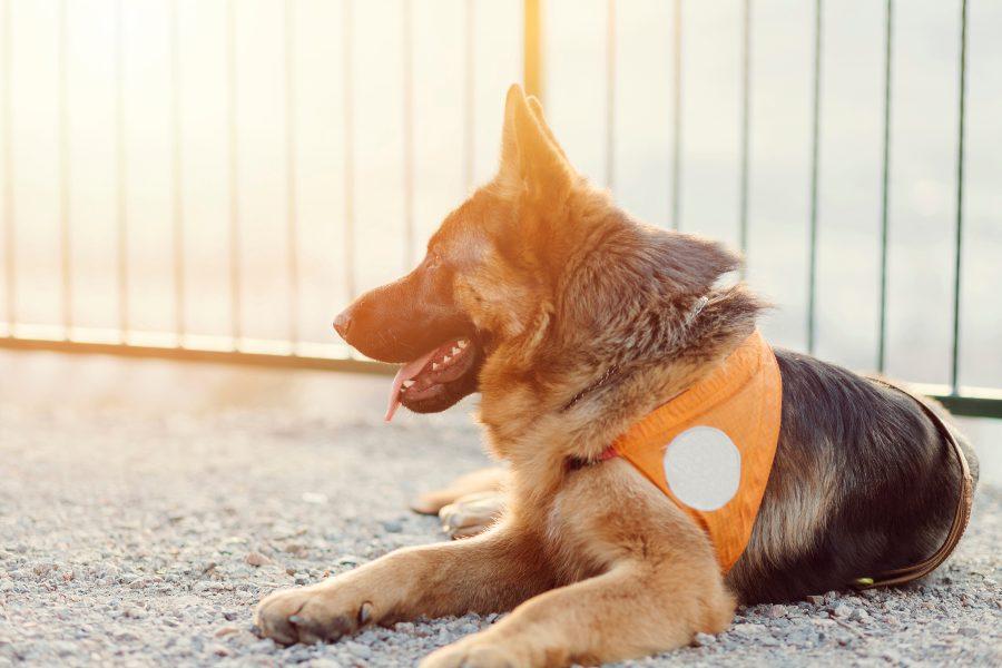perros-de-asistencia