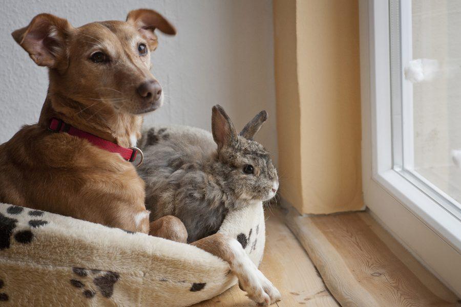 convivencia-de-los-conejos-con-otras-especies.