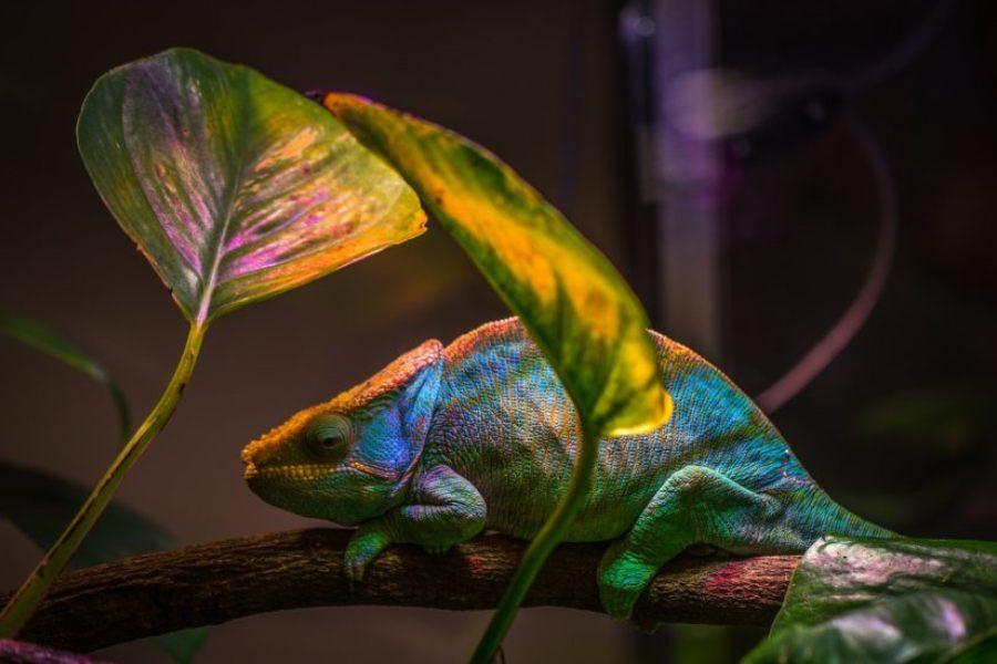 Deshidratación en los reptiles