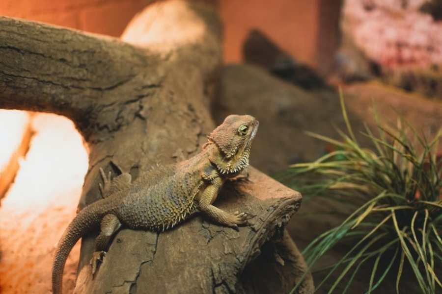 Enfermedades respiratorias en reptiles