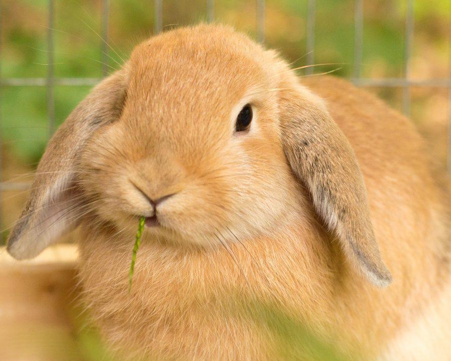 fibra-en-la-alimentacion-de-los-conejos