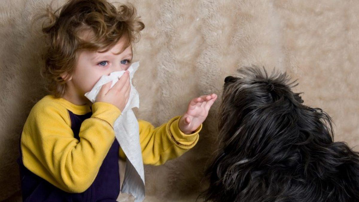 Alergia a los perros - Tiendanimal