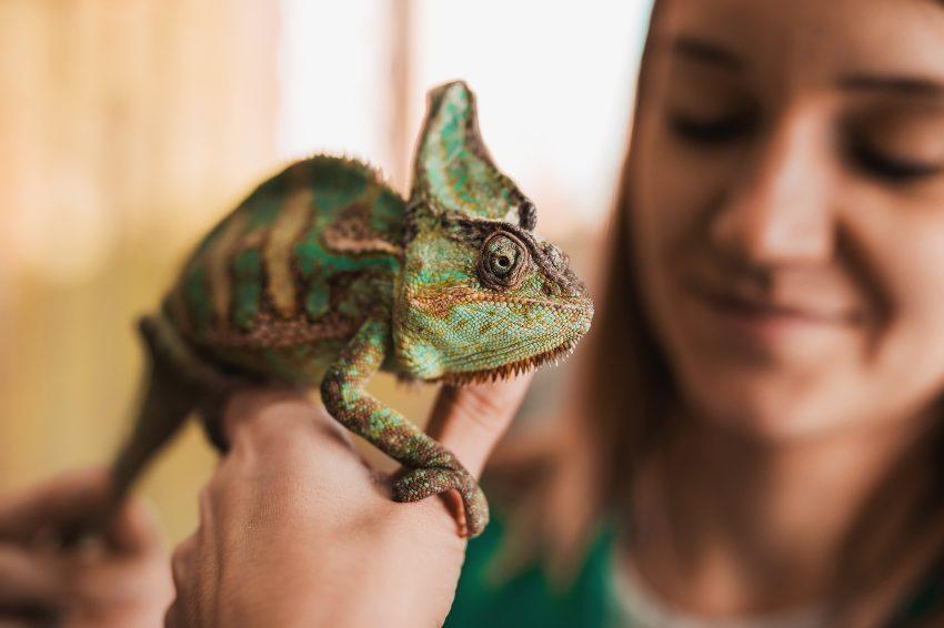 los-reptiles-tienen-personalidad
