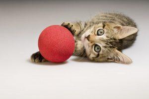 como-educar-a-un-gato
