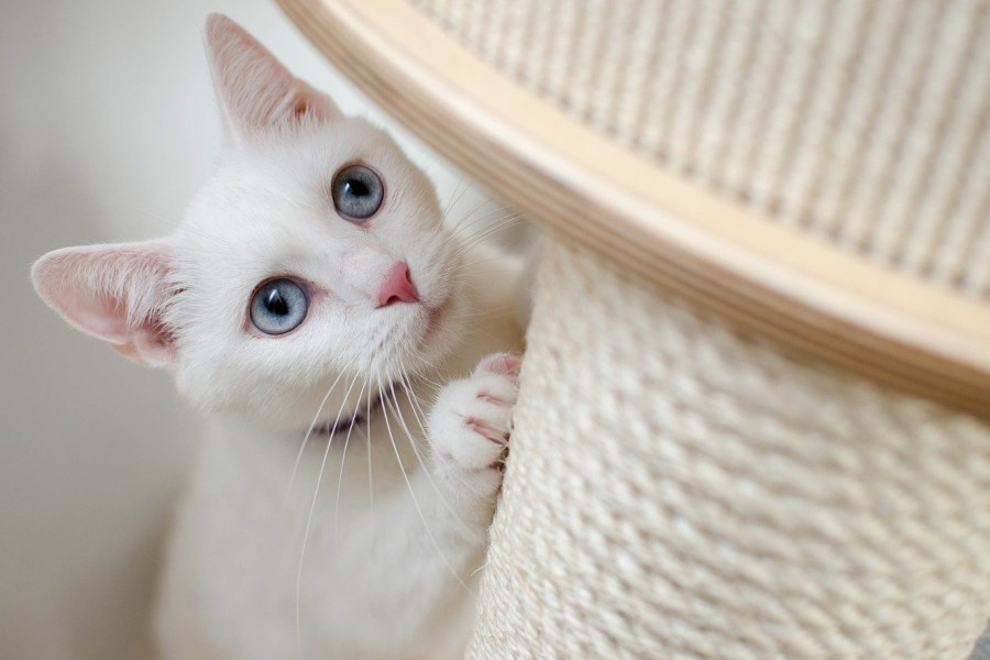 cómo juegan los gatos