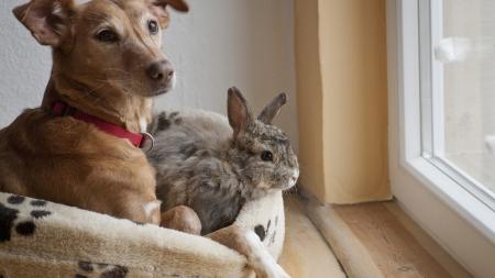 Convivencia de los conejos con otras especies