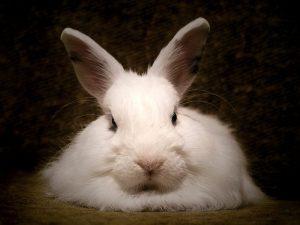 diarrea-conejos