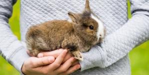 ¿Cómo educar a un conejo?