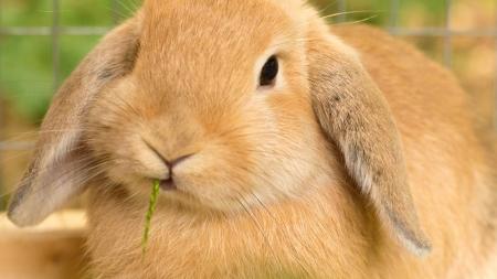 Fibra en la alimentación de los conejos