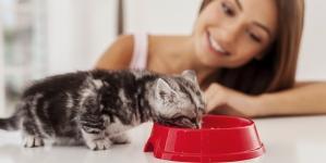 Cómo introducir un gato nuevo en casa