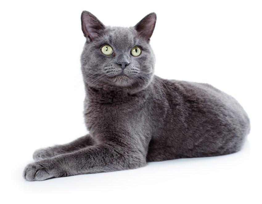 la-supersticion-del-gato-negro