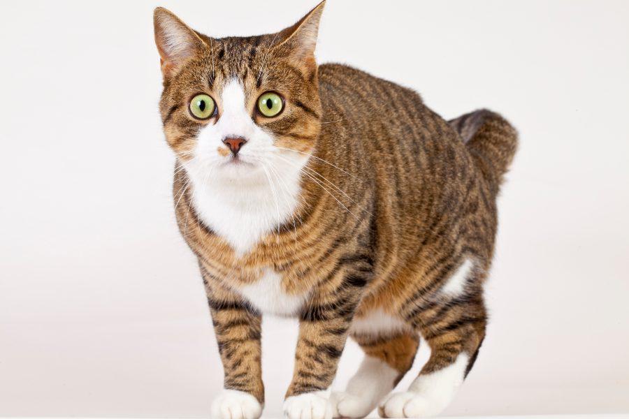 mitos-sobre-los-gatos