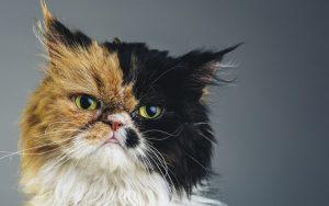 parasitos-intestinales-gatos