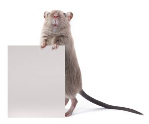 ratones-domesticos.