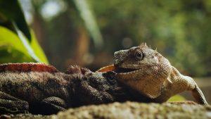 reptiles-pueden-contagiar-salmonelosis