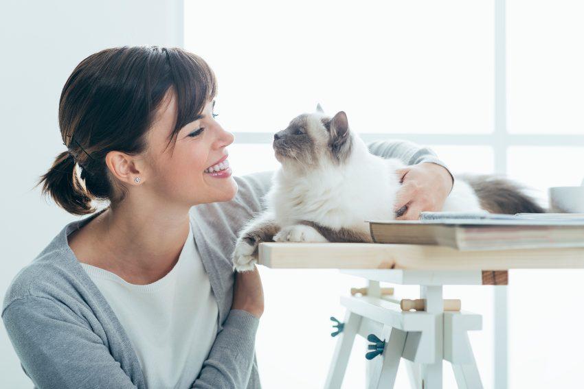 terapia-con-gatos