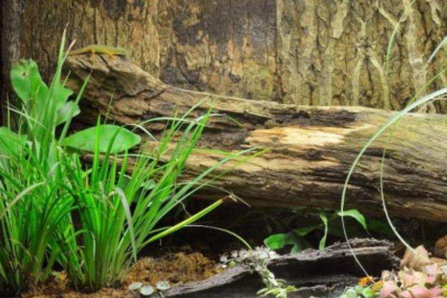 terrario iguanas