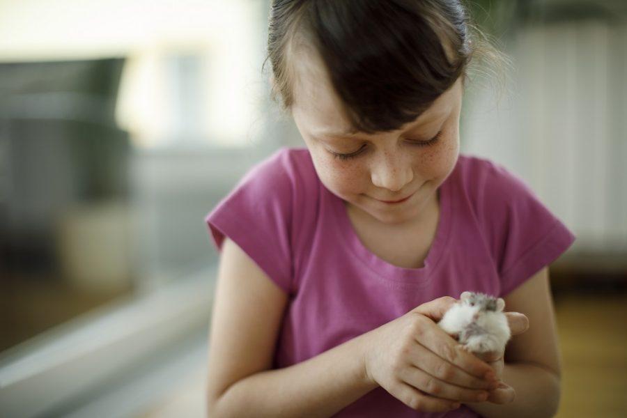 enfermedades-de-hamster-como-detectarlas
