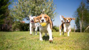 artrosis-en-perros