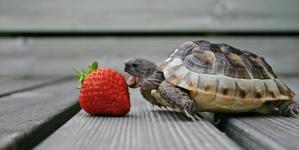 ¿Qué comen las tortugas de tierra?