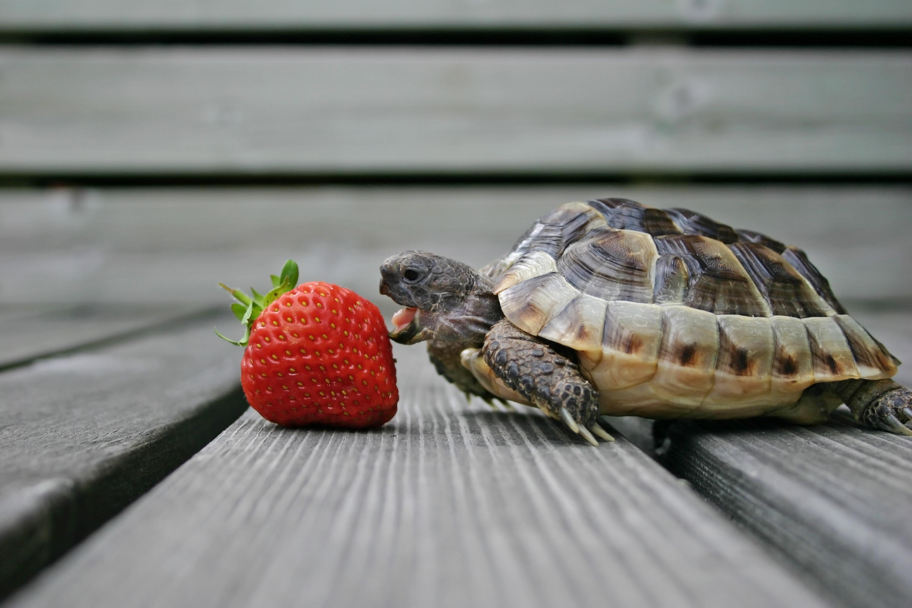 A para tortugas vitamina alimentos con