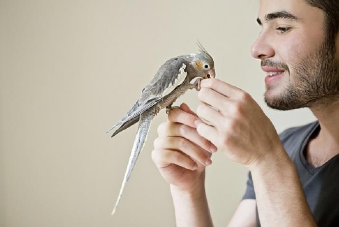 ¿Cuáles son las enfermedades de los pájaros?