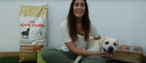 pienso-royal-canin-sterilised