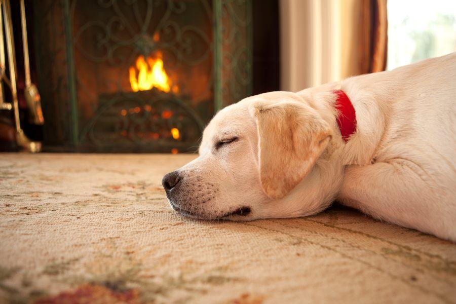 protege-a-tu-mascota-del-frío-este-invierno